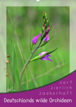 Deutschlands wilde Orchideen (Wandkalender 2020 DIN A2 hoch) von Löwer,  Sabine