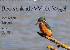 Deutschlands wilde Vögel zwischen Strand und Schilf (Wandkalender 2018 DIN A3 quer) von Lebeus,  Marvin
