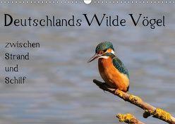 Deutschlands wilde Vögel zwischen Strand und Schilf (Wandkalender 2019 DIN A3 quer) von Lebeus,  Marvin