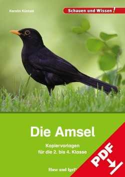 Die Amsel – Kopiervorlagen für die 2. bis 4. Klasse von Küntzel ,  Karolin