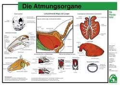 Die Atmungsorgane von Deutsche Reiterliche Vereinigung e.V. (FN), Hertsch,  Bodo, Spenlen,  Uwe