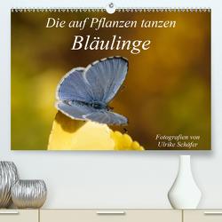 Die auf Pflanzen tanzen: Bläulinge (Premium, hochwertiger DIN A2 Wandkalender 2021, Kunstdruck in Hochglanz) von Schäfer,  Ulrike