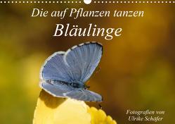 Die auf Pflanzen tanzen: Bläulinge (Wandkalender 2021 DIN A3 quer) von Schäfer,  Ulrike