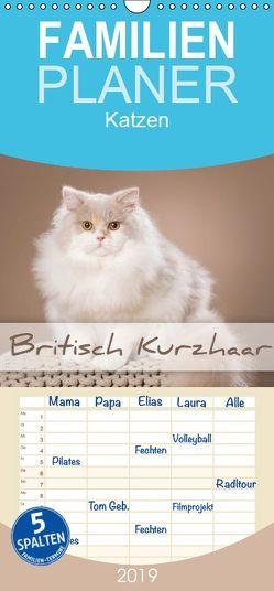 Die Britisch Kurzhaar Katze – Familienplaner hoch (Wandkalender 2019 , 21 cm x 45 cm, hoch) von Bildarchiv,  Trio