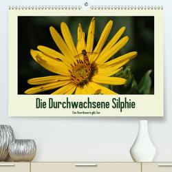 Die Durchwachsene Silphie – Eine Amerikanerin gibt Gas / CH-Version (Premium, hochwertiger DIN A2 Wandkalender 2021, Kunstdruck in Hochglanz) von Stolzenburg,  Kerstin