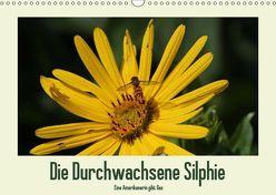 Die Durchwachsene Silphie – Eine Amerikanerin gibt Gas / CH-Version (Wandkalender 2019 DIN A3 quer) von Stolzenburg,  Kerstin