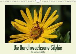 Die Durchwachsene Silphie – Eine Amerikanerin gibt Gas / CH-Version (Wandkalender 2019 DIN A4 quer) von Stolzenburg,  Kerstin