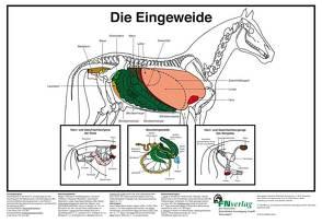 Die Eingeweide von Deutsche Reiterliche Vereinigung e.V., Hertsch,  Bodo, Spenlen,  Uwe