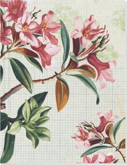 Die Gärten der Künstler Großes Notizheft (A5) Motiv Blütenstrauch von Schöll,  Stephan