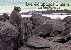 Die Galapagos Inseln – Das Naturparadies (Tischkalender 2019 DIN A5 quer) von Akrema-Photography, Neetze