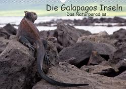 Die Galapagos Inseln – Das Naturparadies (Wandkalender 2021 DIN A3 quer) von Akrema-Photography, Neetze