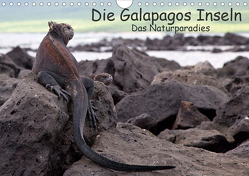 Die Galapagos Inseln – Das Naturparadies (Wandkalender 2021 DIN A4 quer) von Akrema-Photography, Neetze
