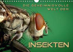 Die geheimnisvolle Welt der Insekten (Wandkalender 2018 DIN A4 quer) von Bleicher,  Renate