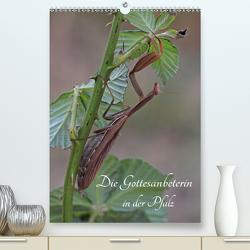 Die Gottesanbeterin in der Pfalz (Premium, hochwertiger DIN A2 Wandkalender 2020, Kunstdruck in Hochglanz) von juehust