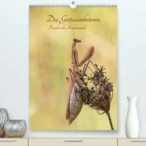 Die Gottesanbeterin. Räuber der Insektenwelt. (Premium, hochwertiger DIN A2 Wandkalender 2021, Kunstdruck in Hochglanz) von juehust