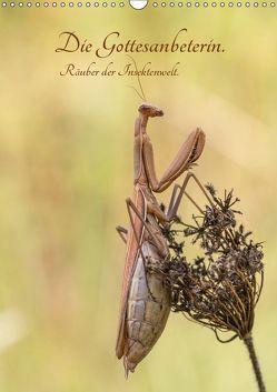Die Gottesanbeterin. Räuber der Insektenwelt. (Wandkalender 2019 DIN A3 hoch) von juehust
