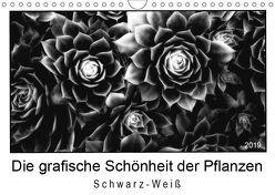 Die grafische Schönheit der Pflanzen – Schwarz-Weiß (Wandkalender 2019 DIN A4 quer) von Wurster,  Beate
