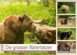 Die grossen Bärentatzen (Wandkalender 2019 DIN A3 quer) von Photo4emotion.com