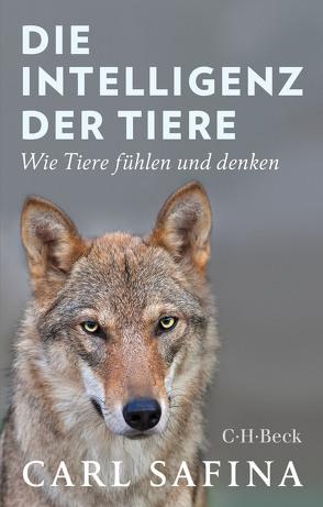 Die Intelligenz der Tiere von Safina,  Carl, Schmid,  Sigrid, Würdinger,  Gabriele