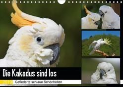 Die Kakadus sind los (Wandkalender 2019 DIN A4 quer) von Lindert-Rottke,  Antje