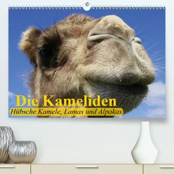 Die Kameliden. Hübsche Kamele, Lamas und Alpakas (Premium, hochwertiger DIN A2 Wandkalender 2020, Kunstdruck in Hochglanz) von Stanzer,  Elisabeth