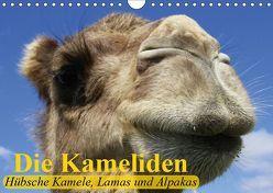 Die Kameliden. Hübsche Kamele, Lamas und Alpakas (Wandkalender 2019 DIN A4 quer) von Stanzer,  Elisabeth