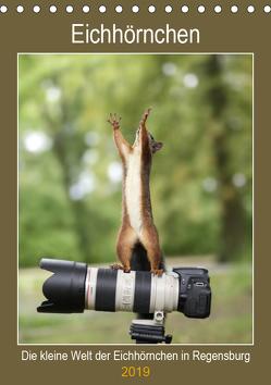Die kleine Welt der Eichhörnchen in Regensburg (Tischkalender 2019 DIN A5 hoch) von Cerny,  Birgit