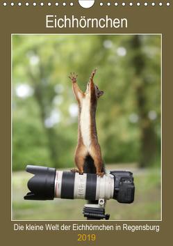 Die kleine Welt der Eichhörnchen in Regensburg (Wandkalender 2019 DIN A4 hoch) von Cerny,  Birgit