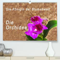 Die Königin der Blumenwelt, die Orchidee (Premium, hochwertiger DIN A2 Wandkalender 2020, Kunstdruck in Hochglanz) von Rosenthal,  Peter