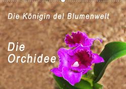 Die Königin der Blumenwelt, die Orchidee (Wandkalender 2020 DIN A2 quer) von Rosenthal,  Peter