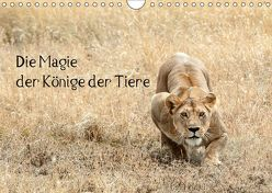 Die Magie der Könige der Tiere (Wandkalender 2019 DIN A4 quer) von Skrypzak,  Rolf