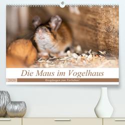 Die Maus im Vogelhaus (Premium, hochwertiger DIN A2 Wandkalender 2020, Kunstdruck in Hochglanz) von Photography by Nicole Köstler,  Passion
