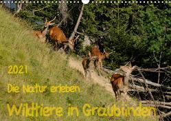 Die Natur erleben – Wildtiere in GraubündenCH-Version (Wandkalender 2021 DIN A3 quer) von Plattner,  Jürg