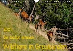 Die Natur erleben – Wildtiere in GraubündenCH-Version (Wandkalender 2021 DIN A4 quer) von Plattner,  Jürg