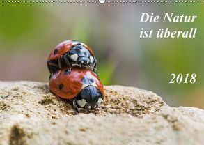 Die Natur ist überall (Wandkalender 2018 DIN A2 quer) von Schröder,  Kurt