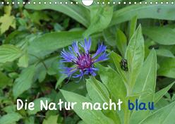 Die Natur macht blau (Wandkalender 2019 DIN A4 quer) von Sokoll,  Stephanie