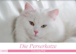 Die Perserkatze – Farbschlag Weiß (Wandkalender 2019 DIN A2 quer) von Klatt,  Arno
