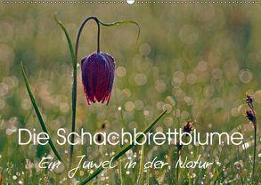 Die Schachbrettblume (Wandkalender 2018 DIN A2 quer) von Klapp,  Lutz
