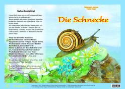 Die Schnecke – Natur-Kamishibai von Fischer-Nagel Andreas, Fischer-Nagel,  Heiderose, Zornik,  Marzena
