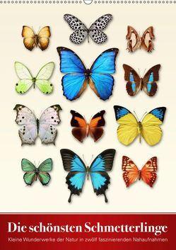 Die schönsten Schmetterlinge (Wandkalender 2019 DIN A2 hoch) von Art Print,  Wildlife