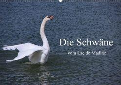 Die Schwäne vom Lac de Madine (Wandkalender 2018 DIN A2 quer) von Nitzold-Briele,  Gudrun