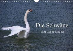Die Schwäne vom Lac de Madine (Wandkalender 2018 DIN A4 quer) von Nitzold-Briele,  Gudrun