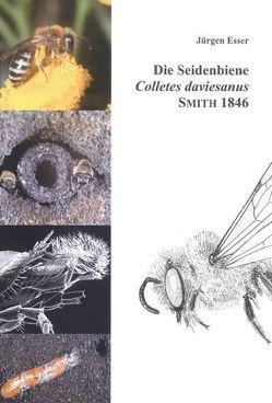 Die Seidenbiene Colletes daviesanus Smith 1846 von Esser,  Jürgen