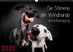Die Stimme der Windhunde (Wandkalender 2020 DIN A3 quer) von Gier,  Marcus
