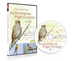 Die Stimmen der Vögel Europas auf DVD von Baumann,  Sabine, Bergmann,  Hans-Heiner, Engländer,  Wiltraud