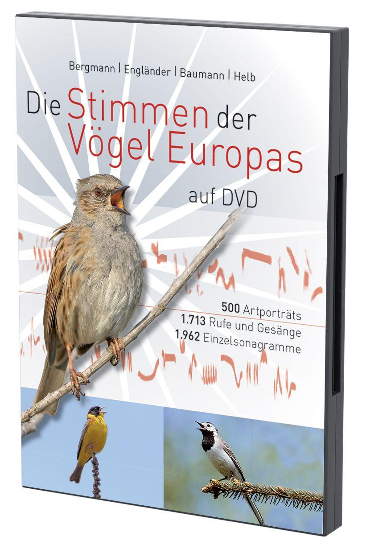 Fantastisch Innere Anatomie Der Vögel Zeitgenössisch - Anatomie ...