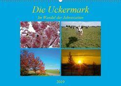 Die Uckermark im Wandel der Jahreszeiten (Wandkalender 2019 DIN A2 quer) von Mellentin,  Andreas