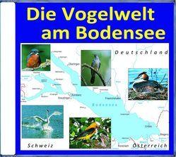 Die Vogelwelt am Bodensee von Dingler,  Karl-Heinz