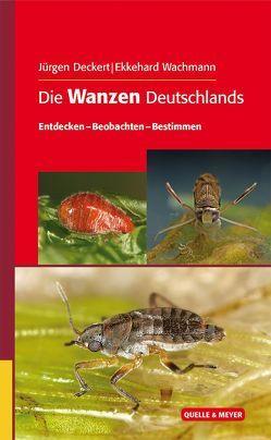 Die Wanzen Deutschlands von Deckert,  Jürgen, Wachmann,  Ekkehard