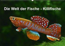 Die Welt der Fische – KillifischeCH-Version (Wandkalender 2019 DIN A2 quer) von Pohlmann,  Rudolf